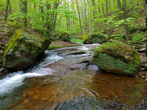 Stony Fork Waterfall Hunting-Tioga State Forest | Endless