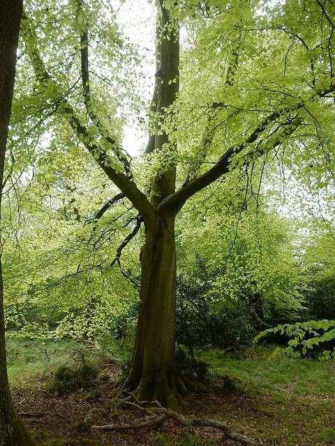 Tree silhouette 3, Nikon COOLPIX S9700