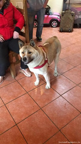 Tue, May 23rd, 2017 Lost Female Dog - Rancho Reillys And Killeen, Carlow - Laois