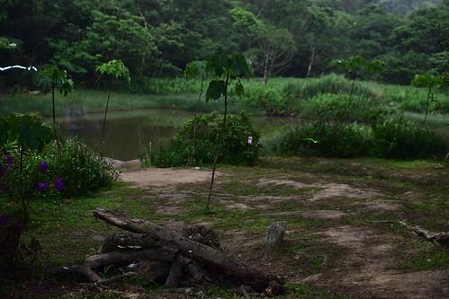 內溝山登山步道-翠湖-螢火蟲