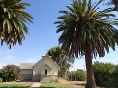 Manangatang. Date palms of the old Anglican Church. It opened in 1929 but services began in the railway station long before this time.