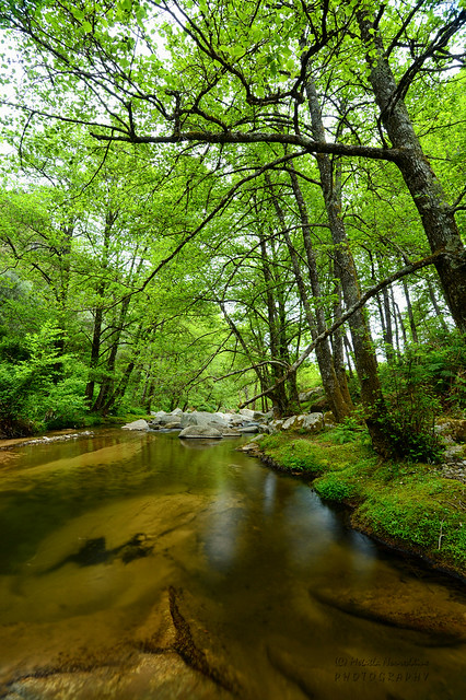 Streams and lush forests of El oueldja