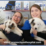 April_Rachel_puppies