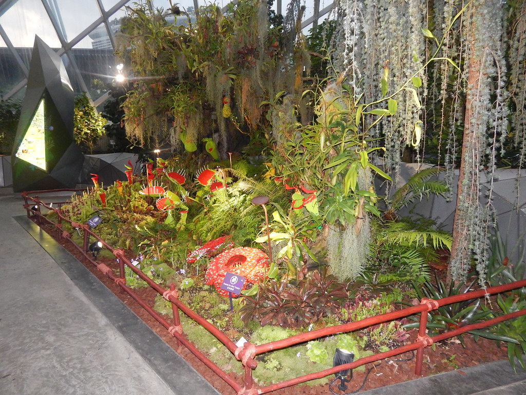 Carnivorous plant displays; Gardens by the Bay, Singapore