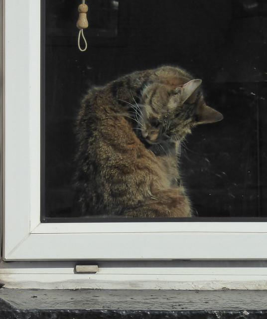 In his window, Panasonic DMC-TZ60