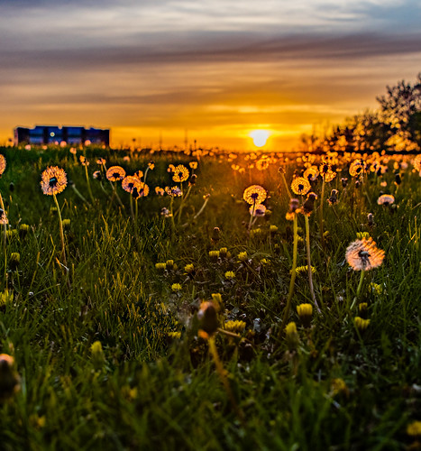 hdr hiawatha 123365 cy365 sunset day123365 3may17 3652017 365the2017edition clouds park unitedstates dandelion iowa field us