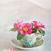 Camellia tea by Sharon Lapkin