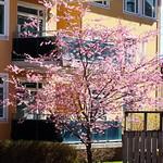 I saw this beautiful tree today - av evisdotter