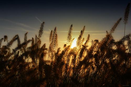 plants sun sunset grass nature silhouette san marino republic sundown clouds dusk