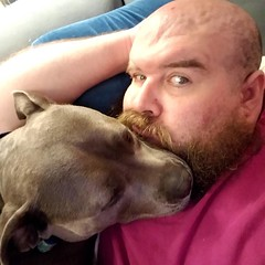 Bonnie decided that my beard is a good pillow. ❤💛💚💙💜 #bonnie_blue_staffy #bonnie_blue_bullie #staffysofinstagram #pitbullsofinstagram #dogsofinstagram #showmeyourpitties #dontbullymybreed #endbsl #dog
