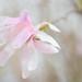 Rainy Day Magnolia by WilliamND4