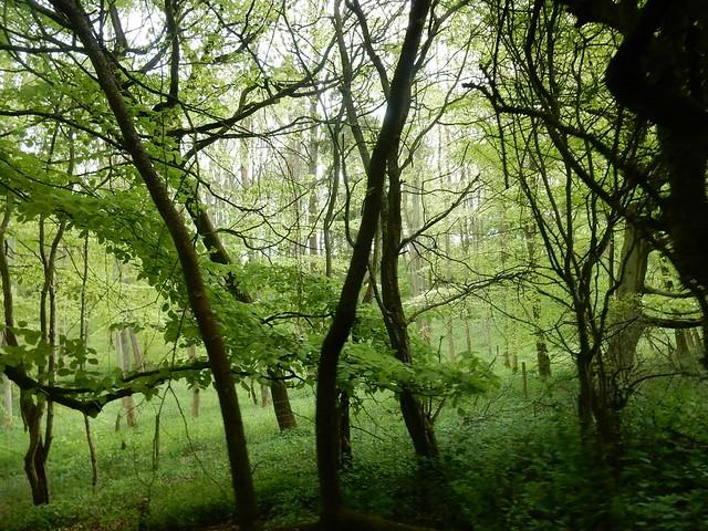Alpine Meadow Wood, Nikon COOLPIX S9700