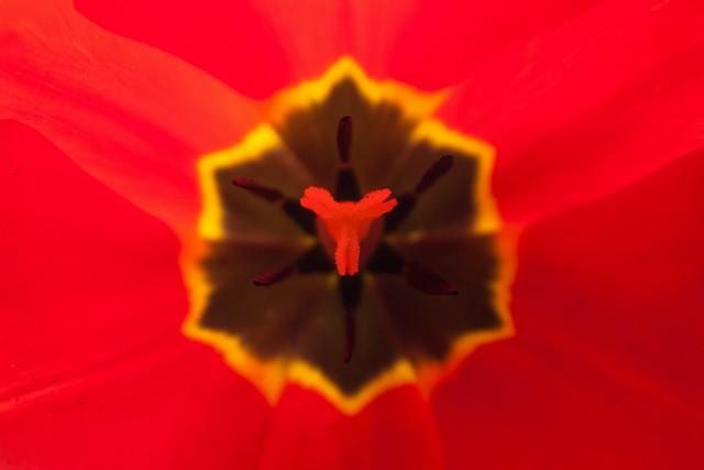 small_file_olsen art flower-3