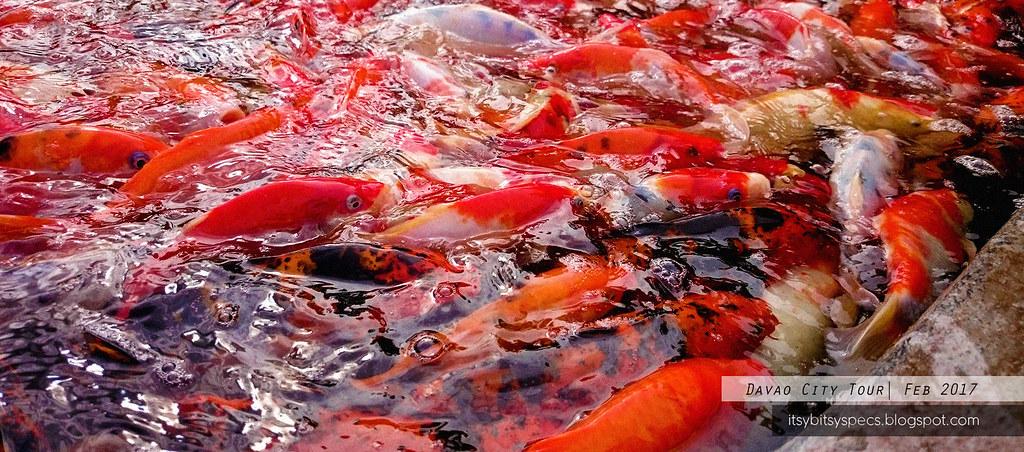 Davao Crocodile Park - Fish Feeding