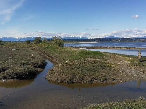 landscape crescentbeach marsh ocean mountains vancouver canada bc river delta