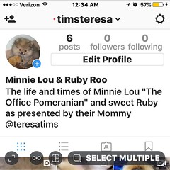 Follow my new Vanity Feed #MinnieLou&RubyRoo just fun #shenanigans by the two of the cutest, smartest most awesome #pups in universe!  Ok maybe not the smartest lol but cute AF! #pomeranian #pom #minpin #miniaturepinscher #dogs #dogsofinstgram #puppy #cut