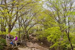 新緑の伊豆ヶ岳山頂