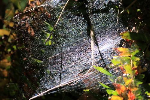 Glittering Spiderweb