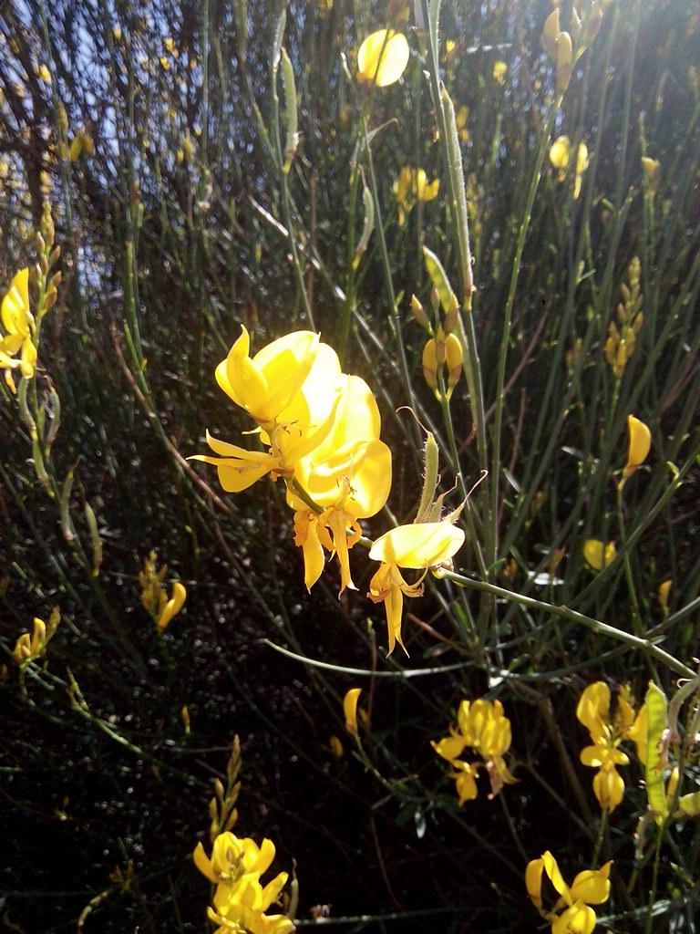 fotografía de flor