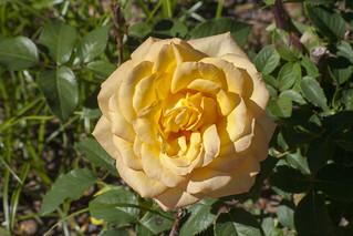 Brookside Gardens  (45)