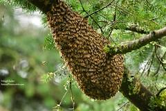 2017-5-4-9742-Swarm!