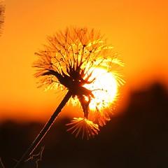 sunset. . .