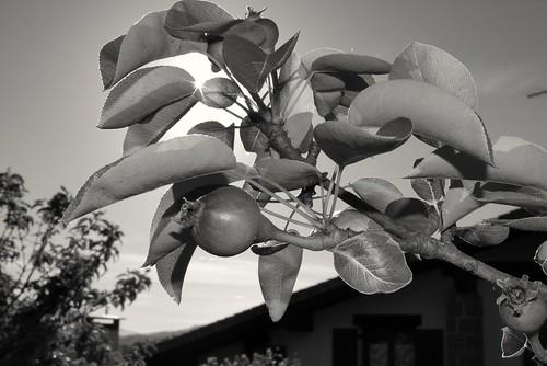 Udaberriko lehen fruituak