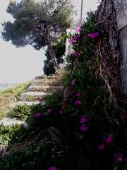 Flowers 32