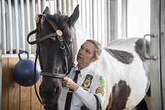 Assoc. Parks Enforcement Patrol Officer is a lead horse trainer in NYC Parks. Dept. Mounted Unit. (2107)