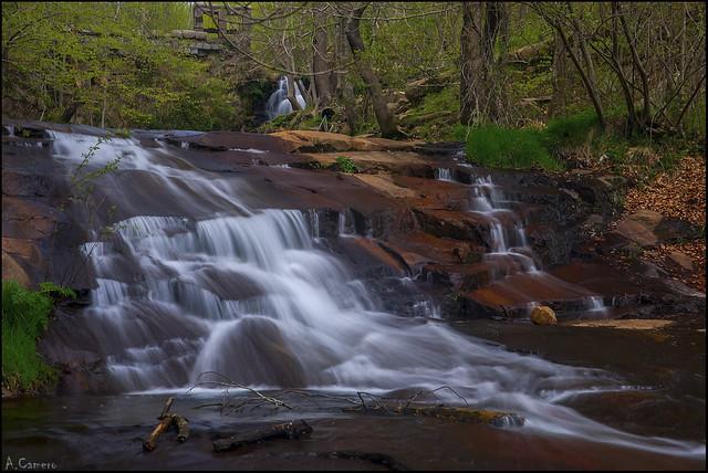 El agua y el bosque.
