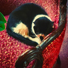 Another of the @suttonflorist #kitties napping in the comfy chair by the window on a #MothersDay #Sunday... #streetphotography #vagabond