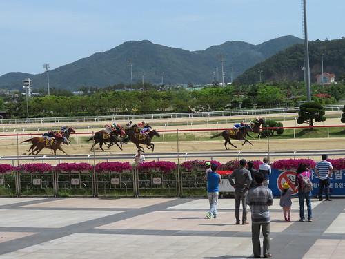 釜山慶南競馬場の直線のラスト