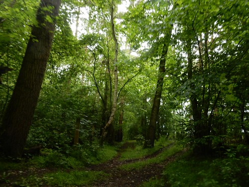 Paddock Wood