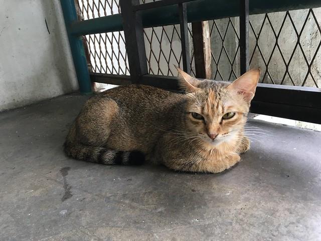パサールセニ駅近くの建物で涼んでいた猫
