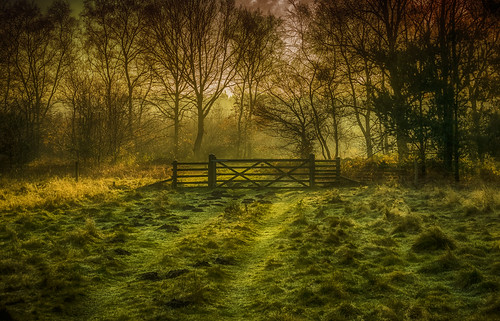 clumber park gate national trust forest 2017 wood sun rise early morning am january grass field paddock d3200 nikon nikkor