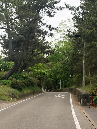 こっちが本物。 :-) 藤川のまつ並木