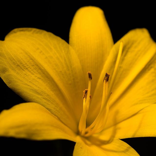 Stella!, Nikon D5100, AF Micro-Nikkor 60mm f/2.8D