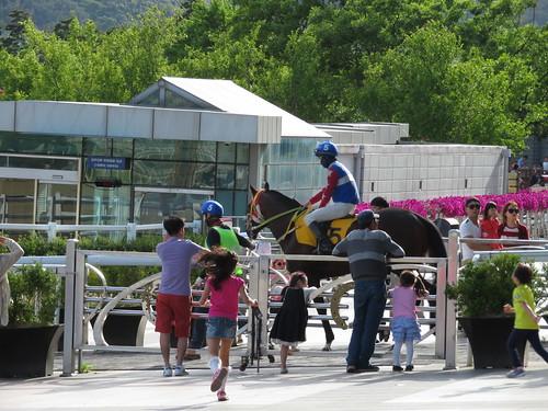 釜山慶南競馬場の本馬場入場のはなみちを通る馬