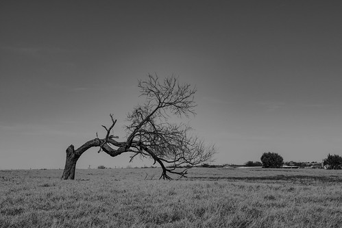 flora tree landscape loneliness negativespace nopeople solitude bw