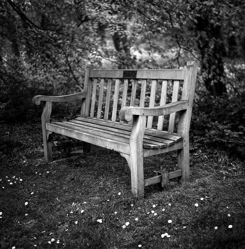 FILM - A seat amongst the daisies