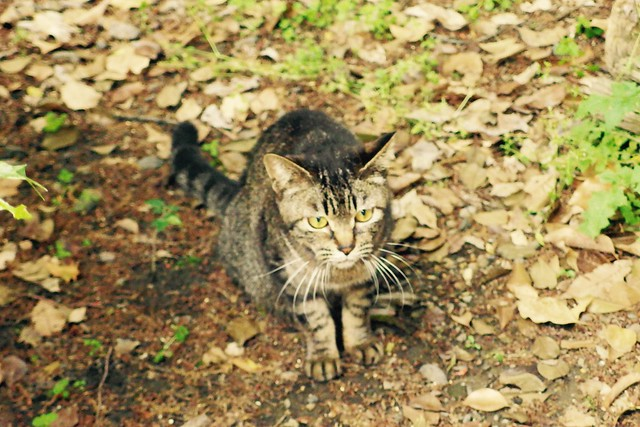 Today's Cat@2017-05-15