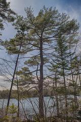 Sackville Lakes Park - First Lake Greenway