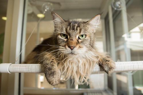Cat OCAS 05092017 -0002