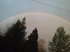 Rainbows an Cheery Trees 063