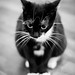 Small photo of - Cat -