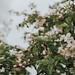 Apple blossom Love IV by linda.richtersz