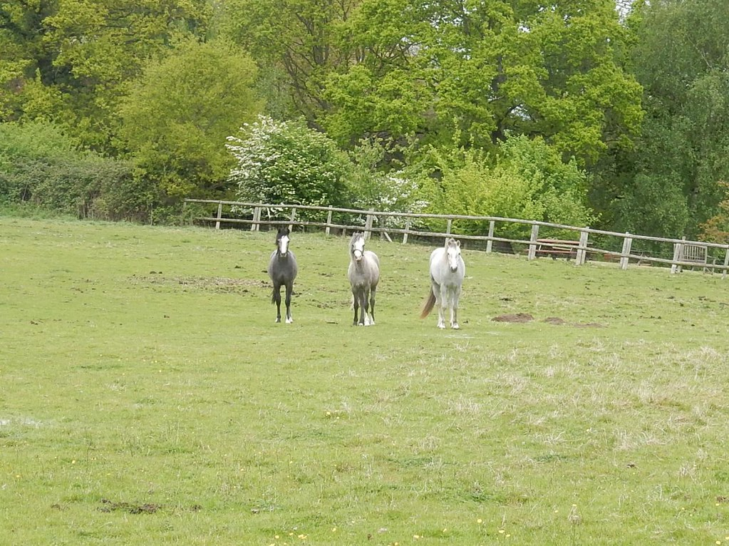 Reservoir Horses Mr Black, Mr Grey and Mr White. Manningtree Circular
