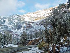 Spring Melt, Tioga Pass Road, Yosemite 2015