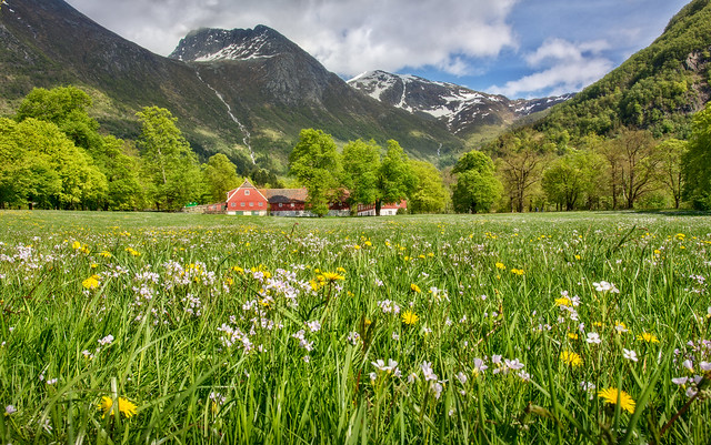 ♫ See Norway's flower valley! Listen to the mountain's proud waterfall! Yes, it is pleasant in the north, among mountains, hills and fjords, among mountains, hills and fjords ♫