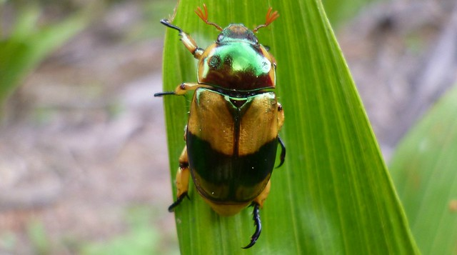 Beetle, Panasonic DMC-FX80